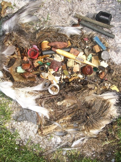 bird carcass barried in plastic-toothbrush